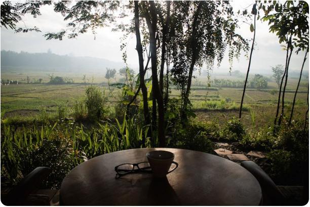 airbnb di jogja dengan pemandangan sawah