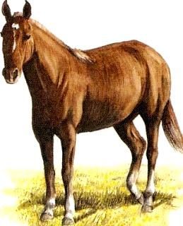 Dibujo de un caballo - Animal doméstico