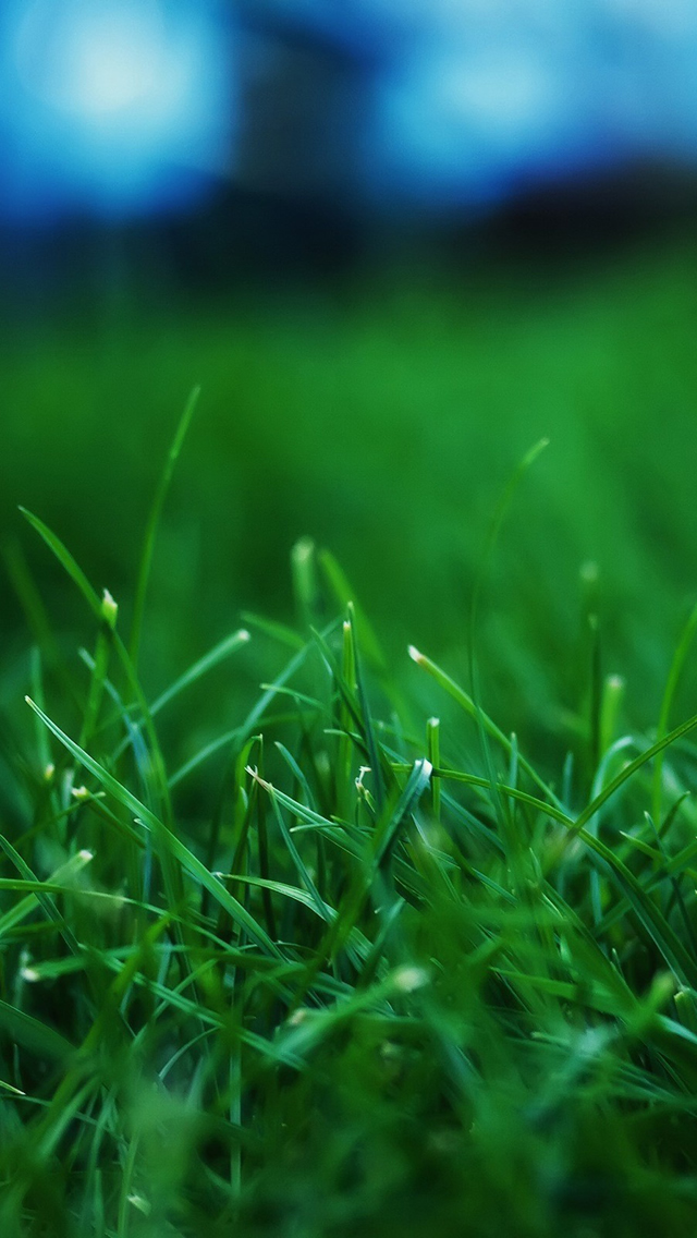 Free Download Iphone 5 Hd Wallpapers 640x1136 Ppt Garden
