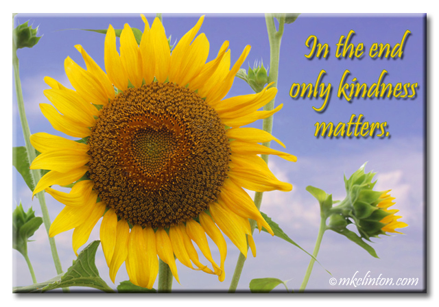 "Sunflower photo with quote ""In the end, only kindness matters"""