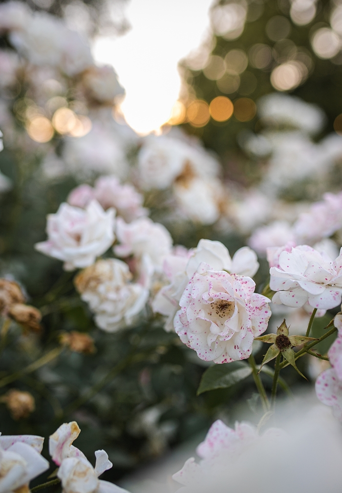 canon6d mark ii zdjęcia kwiatów