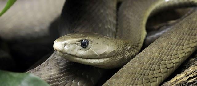 Προσοχή! - Αυτά είναι τα δηλητηριώδη φίδια της χώρας μας - Οι πρώτες βοήθειες αν σας δαγκώσουν