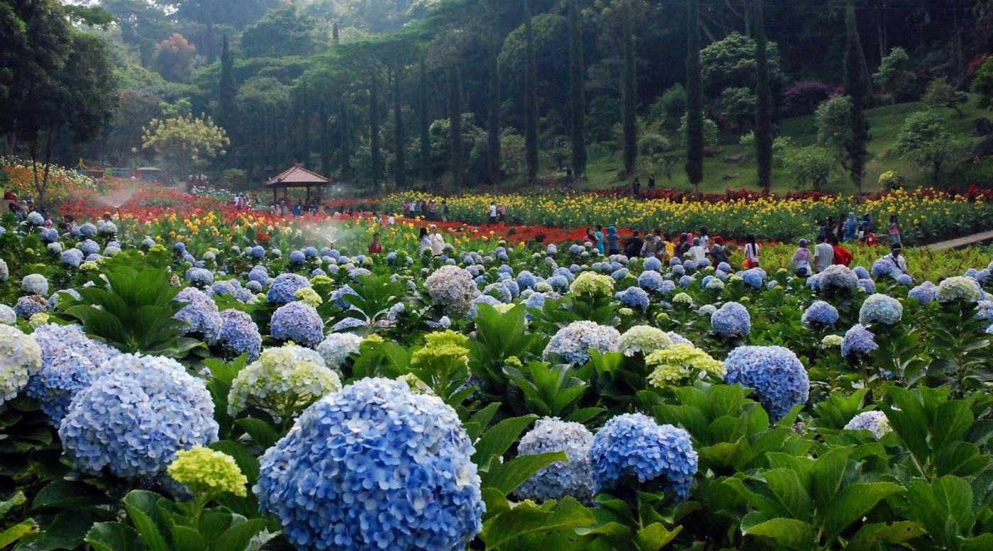 wisata indonesia bagian timur foto kebun bungan tomohon surga tersembunyi di Sulawesi