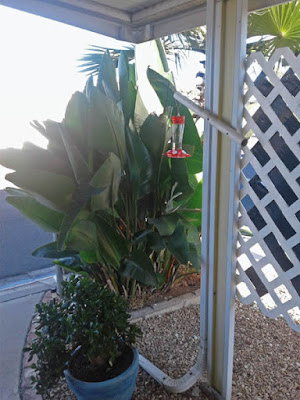Photo of hummingbird feeder placed in the shade of a patio