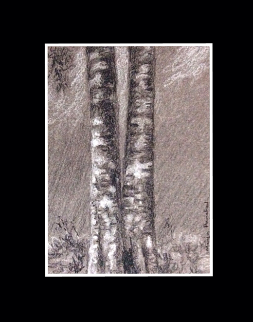 Charcoal and white soft pastel pencil sketch of a tree by Manju Panchal