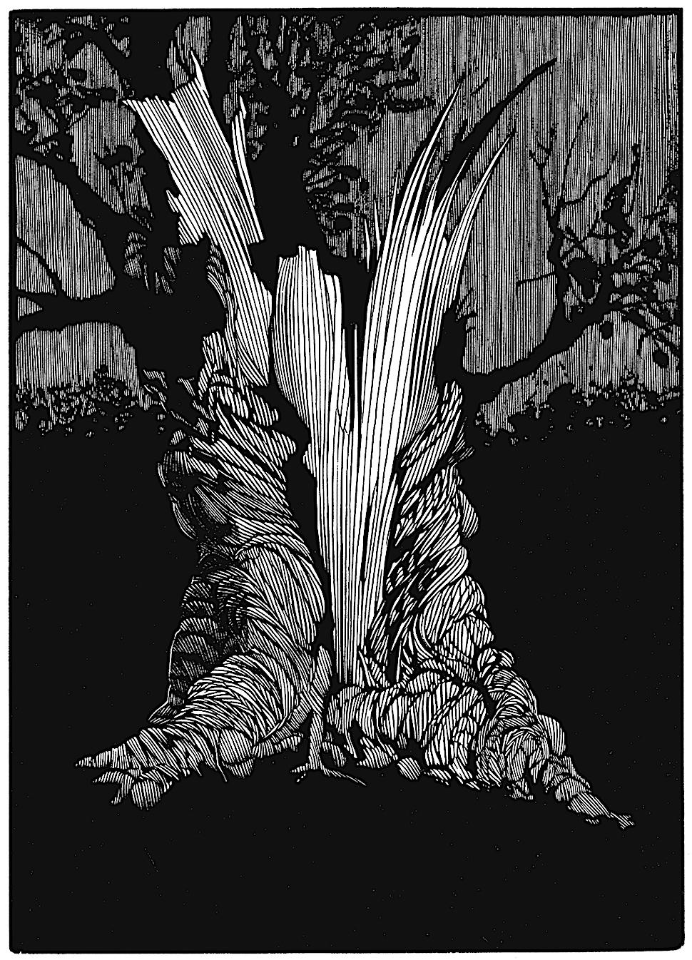 a Barry Moser illustration of a violently damaged tree