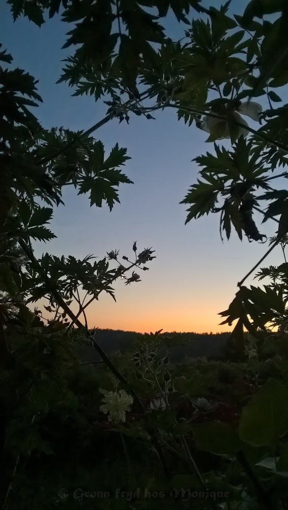 Kveldsutsikt med fløyelshimmel og bjørnebærranker