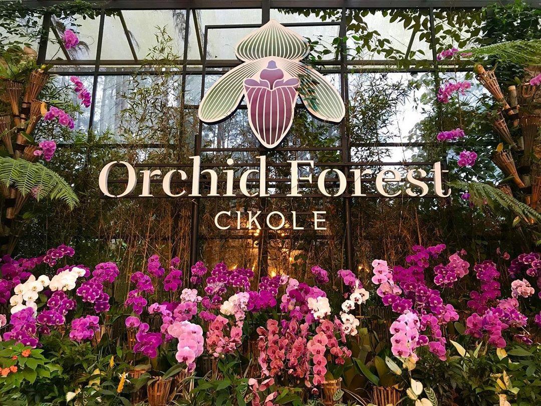 Keindahan Wisata Alam Orchid Forest Cikole Lembang