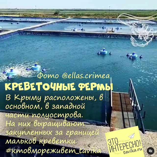 креветочные фермы в Крыму