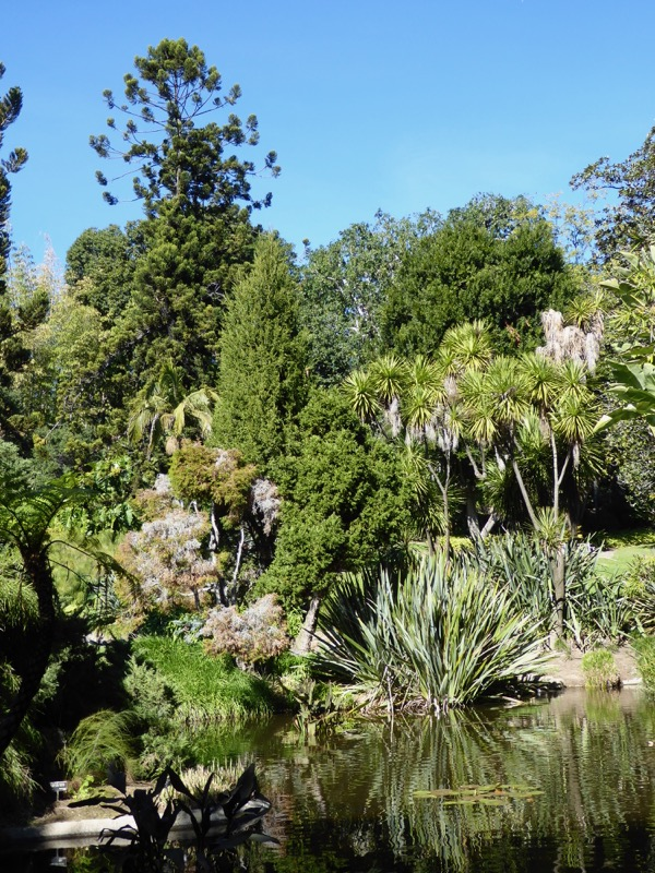 Huntington Garden Lily Pond Pasadena