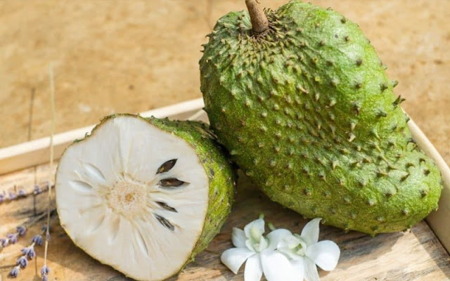 annona squamosa sugar apple cherimoya soursop fruit benefits durian belanda jarjit soursop annona annona muricata