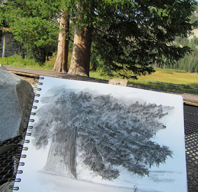 nature pine tree charcoal sketch