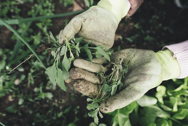 come scegliere giardiniere