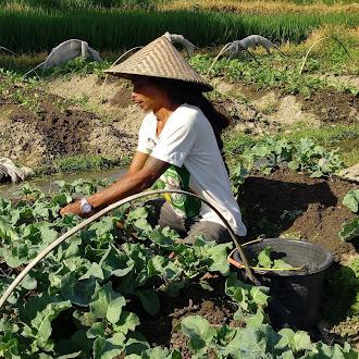 Bertani Organik Mudah dan Murah ala Hars Garden