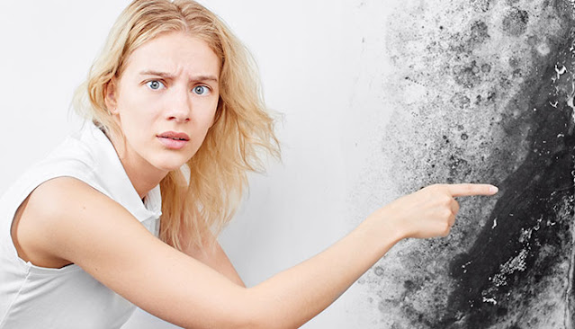 5 Tips For Finding The Right Pros To Deal With Your Mold Problems: eAskme