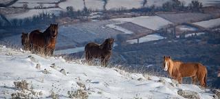 Άγρια άλογα στις χιονισμένες βουνοκορφές της Ελλάδας. Ένα υπέροχο βίντεο