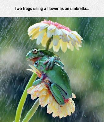 due rane sotto un ombrello naturale