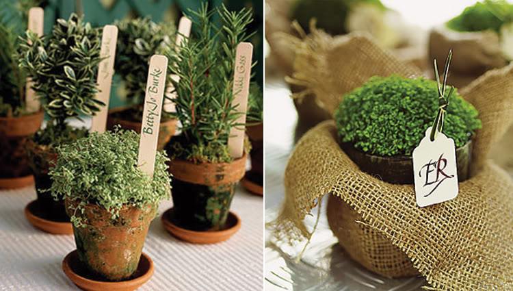 sadzonki dla gości weselnych