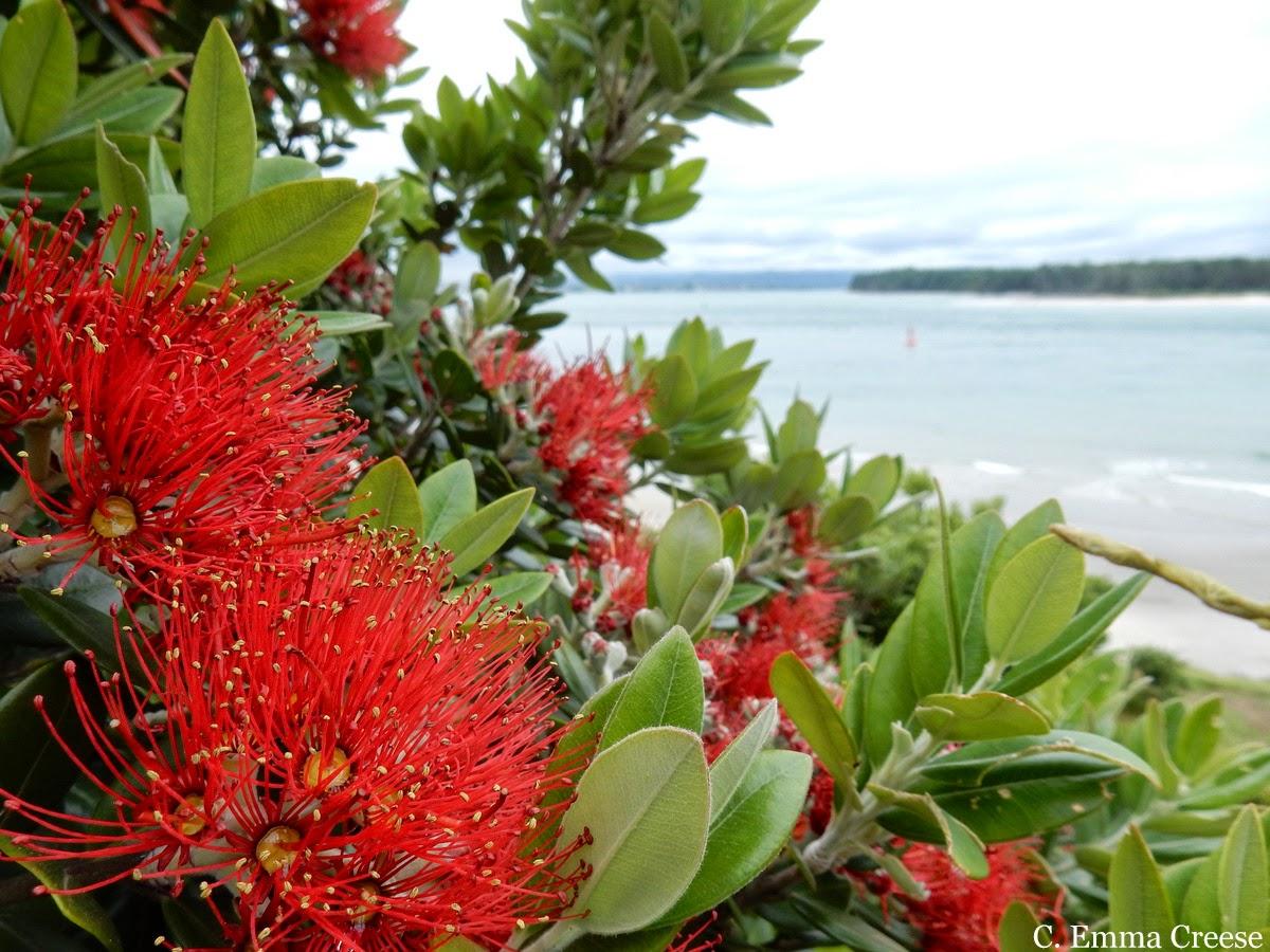 A Kiwi Christmas feat. Mount Maunganui and pies