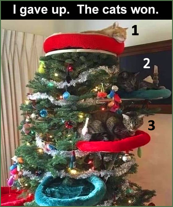 About Xmas tree. ' I gave up. The cats won