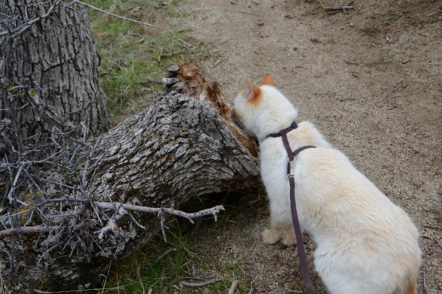 draught broken oak and Timmy giving a sniff