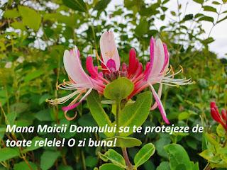 Imagini cu flori frumoase si mesaje deosebite
