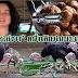 เจ้าแม่ไอเดียคิดสูตร หอยจ๊อไก่งวงและน้ำพริกเผาไก่งวงหนึ่งเดียวในประเทศไทย