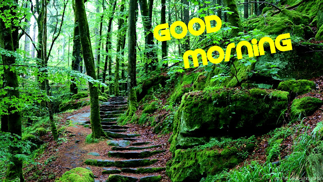Good morning image forest