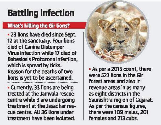 sudden death of lions