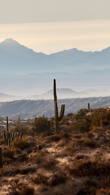 HD Wallpaper Mountains, Hills, Cacti, Bush, Fog