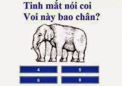 Đố vui giải trí 1: Con voi này có mấy chân?