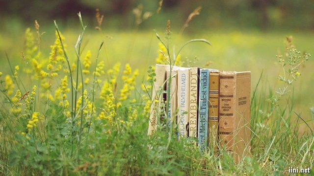 những cuốn sách bên vườn hoa vàng rực rỡ