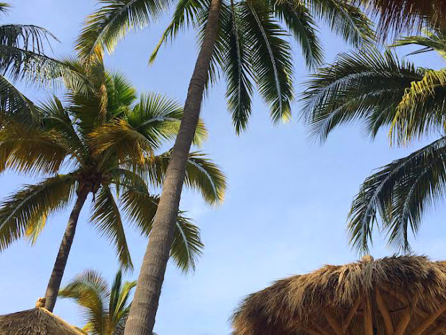 Beach, Palms, Palm trees, Puerto Vallarta, Mexico, Travel, Spring Break