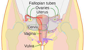 What are the two mode of reproduction ? Organs of Reproductive System.