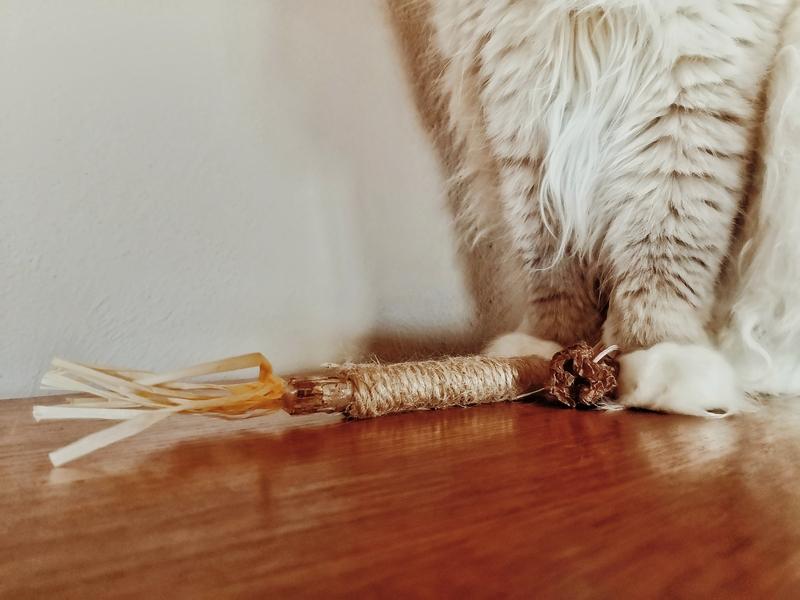 kocimiętka dla kota, waleriana dla kota, matatabi dla kota, kocie zabawki, zabawka dla kota, zioła dla kota, zabawki z kocimiętką, zabawki z walerianą, zabawki matatabi, jak nauczyć kota korzystać z drapaka, jak zachęcić kota do zabawy, kot warszawski, koci behawiorysta