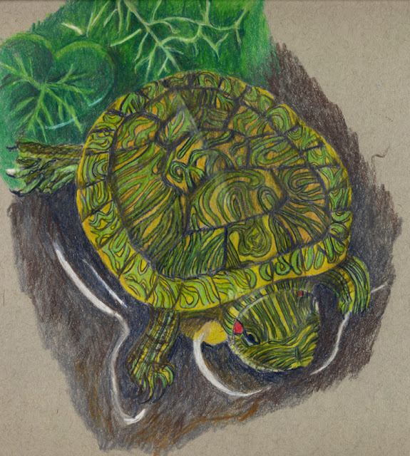Colored pencil drawing -- red slider turtle