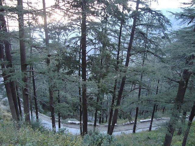 road in chakrata