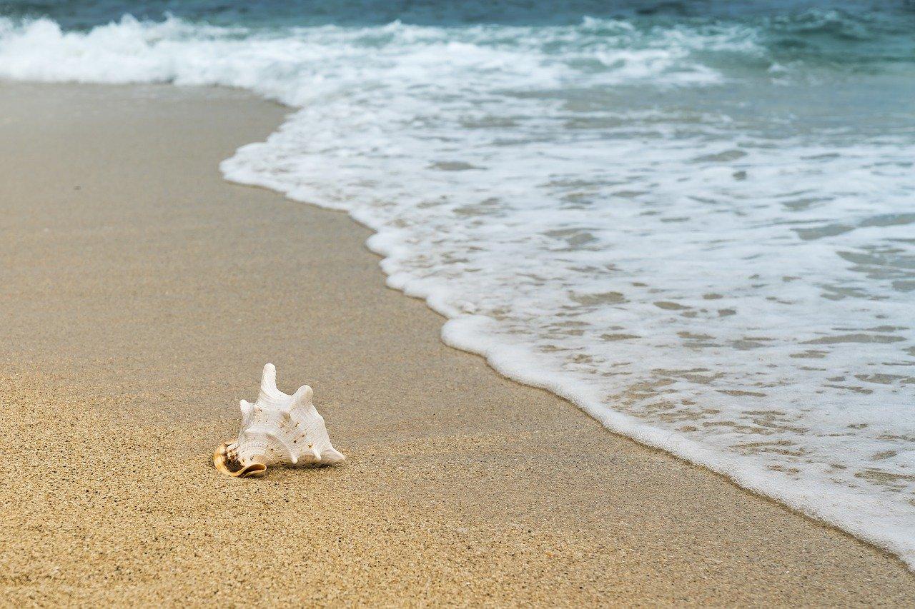 praia com uma concha na areia da praia e a onda do mar ao fundo