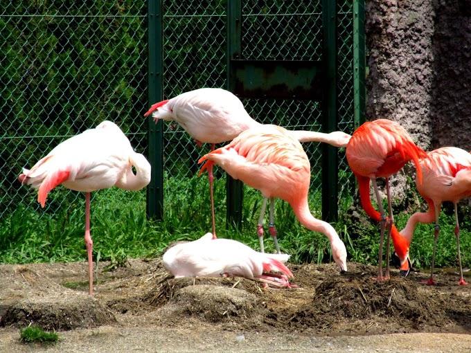 112 #フラミンゴ #鳥 #動物 #動物園 #風景