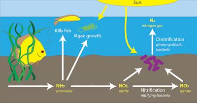 hệ vi sinh trong hồ thủy sinh