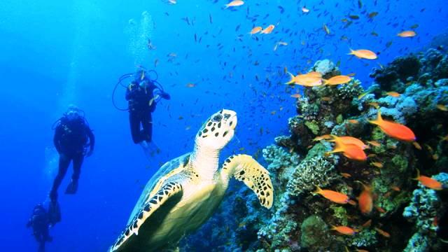 ท่องเที่ยว, แนวหินปะการัง, มัลดีฟส์, สถานที่ดำน้ำ, สถานดำน้ำทั่วโลก, อันดับสถานที่ดำน้ำ, เกาะโคซูเมล เม็กซิโก (Cozumel, Mexico)