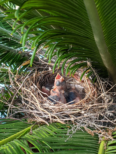 Nest of Baby Cardinals by Heidi Staples of Fabric Mutt