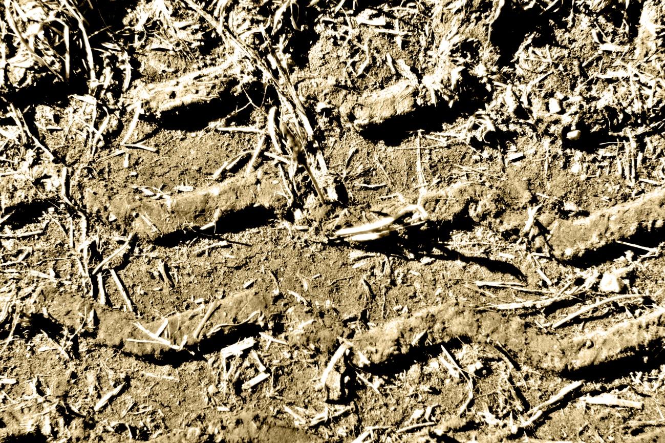 Spuren&Strukturen #1