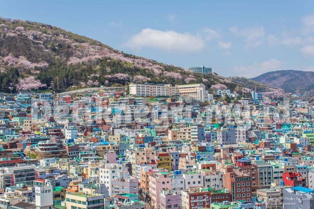 Hidangan Khas Busan Korea Selatan