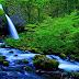 ایمیزون : دنیا کا سب سے بڑا جنگل