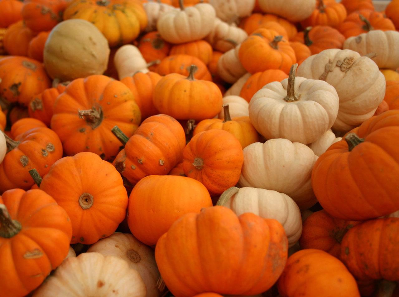 Free Fall Harvest Desktop Wallpaper Scatter Girls Pumpkins Link Up