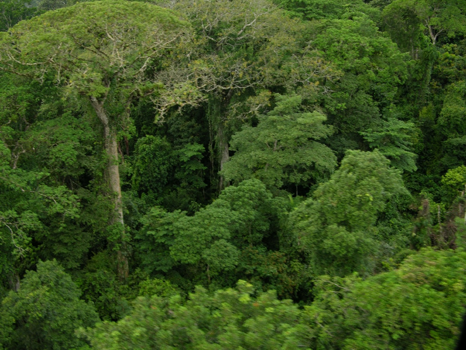 Imagenes De Bosques Tropicales: Germain: Criterios Para Describir Un Bosque
