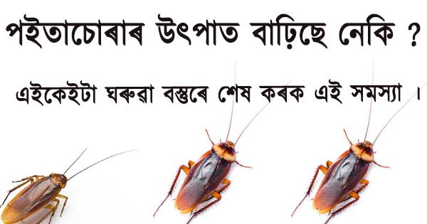 Cochroch Problem Solution in Assamese