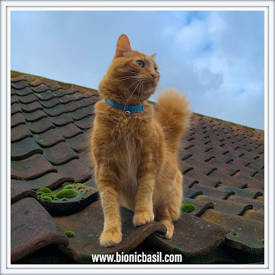 Mandalas on Monday ©BionicBasil® Colouring With Cats #92 Fudge on the roof