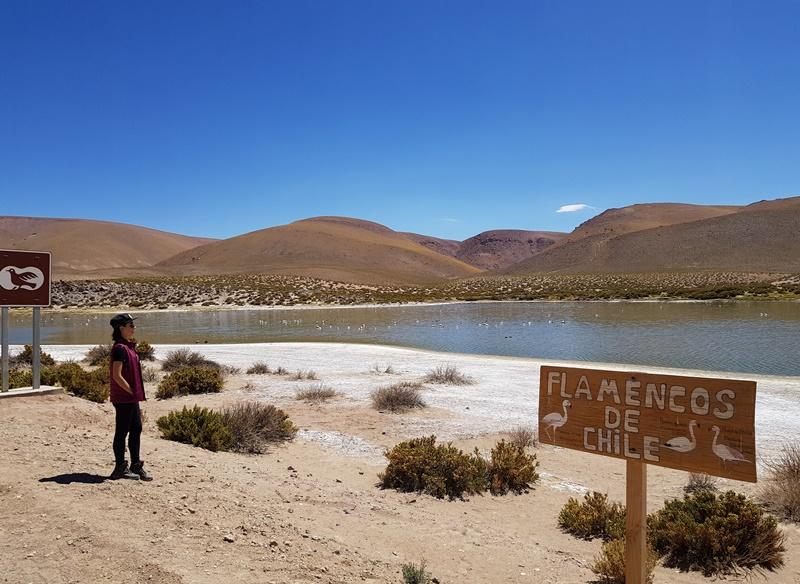 Lagoa dos Flamingos Atacama